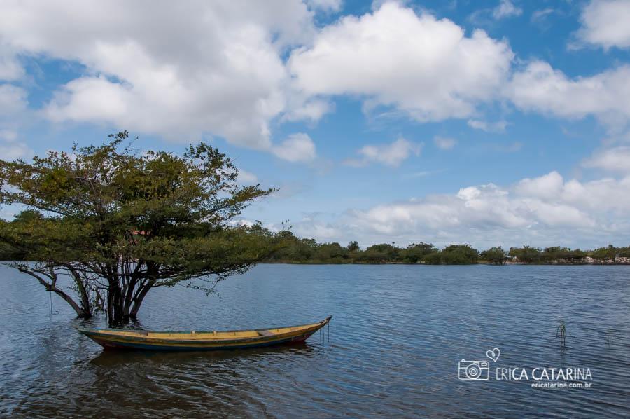 No período de seca esta árvore não fica na água assim...